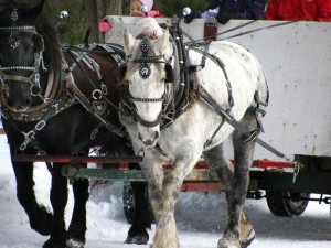 Photo horse in snow